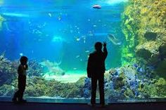 Check out the best tours and activities to experience SEA LIFE® Sydney Aquarium. Don't miss out on great deals for things to do on your trip to Sydney! Reserve your spot today and pay when you're ready for thousands of tours on Viator. Australia Tourist Attractions, Harbor Bridge, Going Home, Sydney Australia, Aquarium, Road Trip, Journey, Tours, Beach