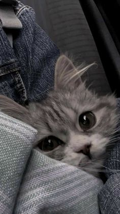 keep cats is helpful to improve the quality of life – - Cutest Baby Animals Cute Baby Cats, Cute Kittens, Cute Baby Animals, Cats And Kittens, Funny Animals, Funny Cats, Kitty Cats, Baby Kitty, Cats Meowing