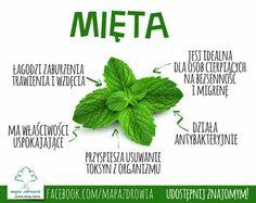 Healthy Lifestyle, Herbs, Life Hacks, Food, Essen, Herb, Meals, Healthy Living, Yemek