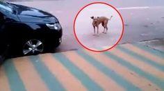 Musica in strada, il cane la ascolta e inizia a ballare al ritmo perfetto