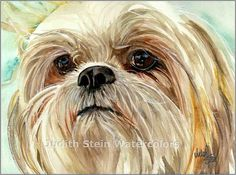 SHIH TZU Toy Dog 15x11 Giclee Watercolor Print by k9stein on Etsy, $40.00