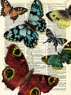 Selection of Butterflies - Digital Print by Marion McConaghie