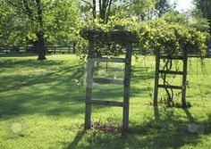 Grape arbor stock photo, Grape arbor in the backyard in Kentucky in springtime by photolady