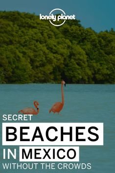 Mexico is home to many amazing beaches, but the best ones are not on the usual trail! Here are some Mexican beach destinations that you've probably never heard of!
