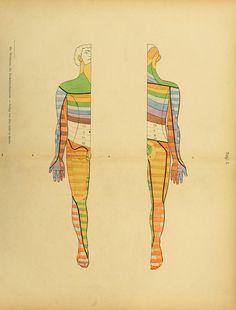 Die Ruckenmarksnerven Und Ihre Segmentbezuge 1900