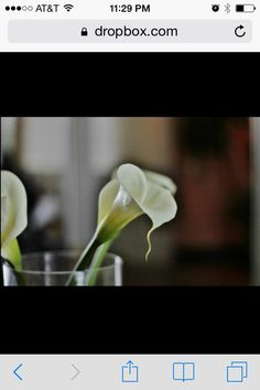 Simplistic Calla Lilly by @embellishedevents_interiors