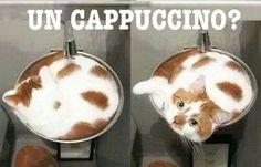 # Cappuccio