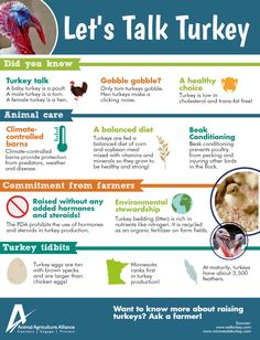 11 Facts about Turkeys! Baby Turkey, Tom Turkey, American Agriculture, Animal Agriculture, Female Turkey, Turkey Facts, All About Animals, Livestock, Cholesterol
