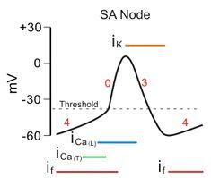 hCG has alpha and beta subunit. we measure beta for
