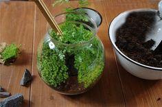 微景觀生態瓶近幾年在城市裡悄然流行,將苔蘚、多肉等植物,加上各種籬笆、砂石、可愛的卡通人物、動物裝進
