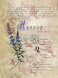 BOS ~ Hyssop herb page: