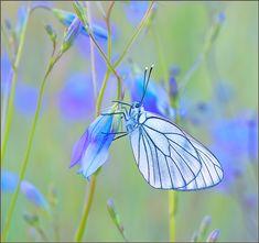 35PHOTO - Евгений Кирилкин. - ***