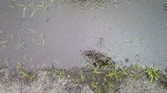 #Drops #Puddle #rain #raindrops, #Water # AnneStrasserBlog, April 1, 2014