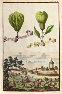 Johann Volckamer - Limon Peretto o Spada fora incanellato, Perettin
