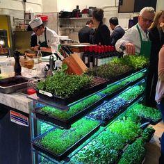 Fondle those microgreens, Chef. (at Bouley Botanical)