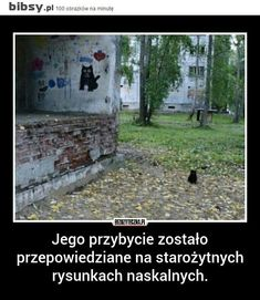 Wtf Funny, Funny Jokes, Hilarious, Love Memes, Best Memes, Polish Memes, Everything And Nothing, Quality Memes, Creepypasta