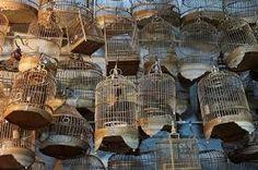 """Résultat de recherche d'images pour """"cage oiseaux chinoise"""""""