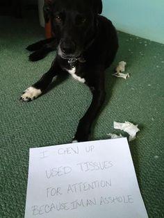 Publicly shamed dogs.