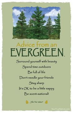 Advice from an Evergreen Frameable Art Card – Your True Nature, Inc. Advice Quotes, Life Advice, Good Advice, Advice Cards, Nature Quotes, Forest Quotes, True Nature, Spirit Guides, Evergreen