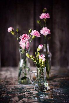 flowers - oeillets rose