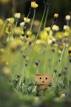 Danbo in a meadow Danbo, Miss Piggy, Creative Photography, Art Photography, Box Robot, Amazon Box, Japanese Robot, Cute Box, Little Boxes