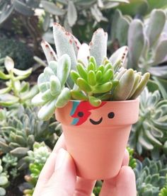 33 Creative DIY Cactus Planters You Should Not Miss - Architecturehd Cacti And Succulents, Planting Succulents, Garden Plants, Indoor Plants, House Plants, Planting Flowers, Cactus Planters, Plants Are Friends, Cactus Y Suculentas