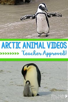 Classroom Friendly Videos Arctic Animals teacher approved great for your January units of study. Polar bears, penguins, and other animals in winter! Kindergarten and first-grade appropriate videos for your classroom. Kindergarten Science, Science Activities, Winter Activities, Preschool Winter, Elementary Science, Science Lessons, Kindergarten Classroom, Arctic Habitat, Artic Animals