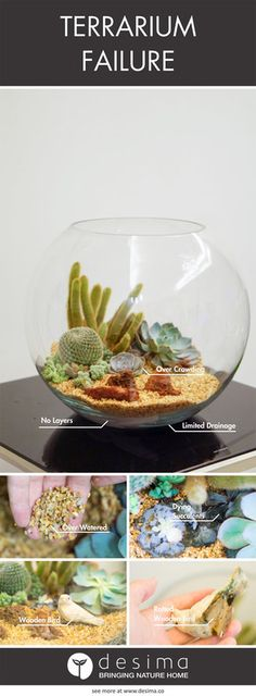 Use these terrarium guides to build your perfect little garden.