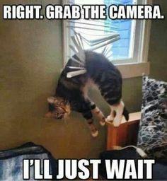 Poor kitty! Lol