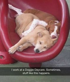 35 Funny Animals Can't Stop Laughing