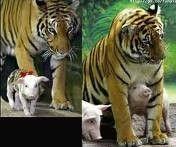 Check this funny animal here: http://funnypicsofanimals.com/post/139154079595 #funny #animal #lol #haha #gif #fail