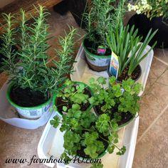 Hometalk   Container Herb Garden
