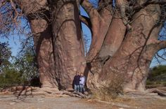 Largest tree Photoshop Picture