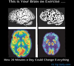 This is your brain on exercise ....  Exercise and Your Brain –  How 20 Minutes Could Change Everything !  #exercise #hormones #alzheimers #fitness #weightloss #metabolism #brainandexercise #fitfam