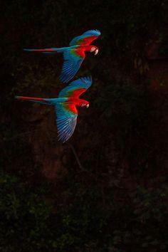 2015 Audubon Photography Awards Top 100   Audubon