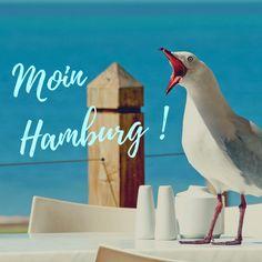 Moin aus Hamburg! Der Hamburg-Blogartikel aus der TEXTIEREREI ist fertig!Just read it! Bird, Seafood Market, City, Hamburg, Birds, Birdwatching