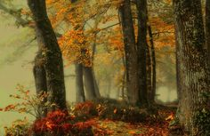 autumn colors! by Patrice Thomas Photography