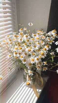 Daisy Wallpaper, Flower Phone Wallpaper, Nature Wallpaper, Nature Aesthetic, Flower Aesthetic, White Aesthetic, Spring Aesthetic, Aesthetic Pastel Wallpaper, Aesthetic Backgrounds