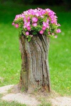 Tree stumps need not be uprooted and thrown away. Trees which have been cut down with the stump left behind can be easily recycled and reused. How? Well tree stump in garden works in...
