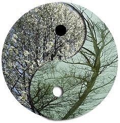 ying yang trees in balance