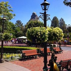 Disneyland does not sell gum on purpose to keep the grounds clean. They also don't sell shelled peanuts.