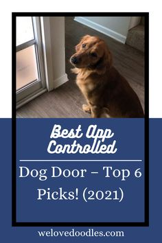 Having a dog door is a nice addition to your house that simplifies the process of letting the dog inside and outside. Don't you ever just get tired of opening the door for them while you're in bed? Alternatively, maybe you want the ability to let your dog out the doggie door when you're not home, but you want the security of being able to lock it back up as well. Cute Puppies, Cute Dogs, Love Doodles, App Control, Dog Quotes, Dog Grooming, Dog Mom, Funny Dogs, Best Dogs