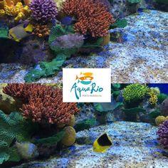 Curioso para conhecer a nova atração da Cidade Maravilhosa? Confira nossa matéria com tudo sobre o #AquaRio!