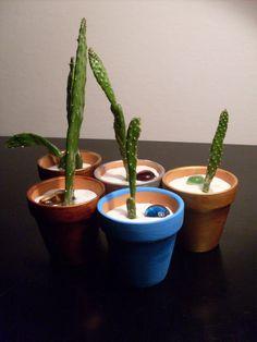 Miniature Prickly Pear Cactus Plants Lot of 5 Mini Opuntia cochenillifera Mini Mexican Nopales Cactaceae