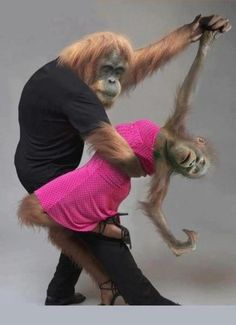 PROOF POSITIVE (NOT photoshopped!) that primates have a LOT more fun than homo sapiens.