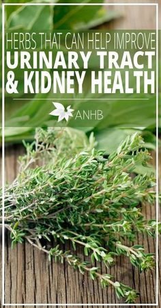 Herbs That Can Help Improve Urinary Tract and Kidney Health All Natural Home and Beauty herbology herbalism healing plants herbal medicine Natural Health Remedies, Natural Cures, Natural Healing, Herbal Remedies, Natural Foods, Cold Remedies, Natural Treatments, Natural Beauty, Holistic Remedies