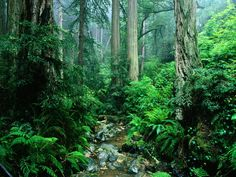 Amazon Rain Forest – I want to experience the wonder of nature at its best.