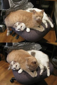 Sharing the seat nicely