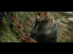 Brown Bear, Movie Nights, Movies, Animals, Youtube, Animales, Films, Animaux, Cinema