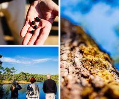 Les Réservoirs de Piraillan, espace naturel de la presqu'île, qui offre des couleurs nouvelles à l'automne comme en hiver. Rencontre avec Marie-Catherine, une guide de pays qui nous en parle avec passion #legecapferret #piraillan #nature #landscape #automne #autumn #sunrise